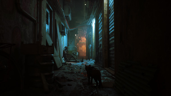 stray lonely cat